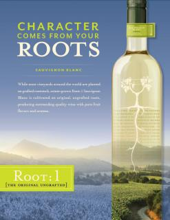 Root: 1 Sauvignon Blanc Sell Sheet